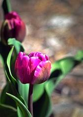 memory-flower.jpg